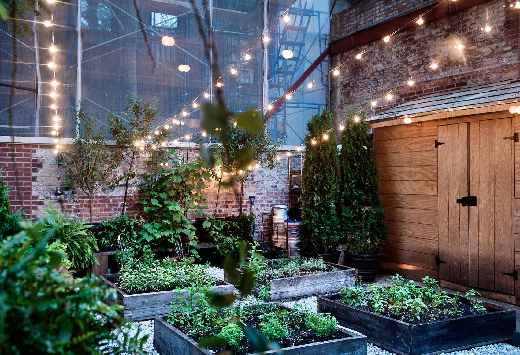 The chef's herb garden